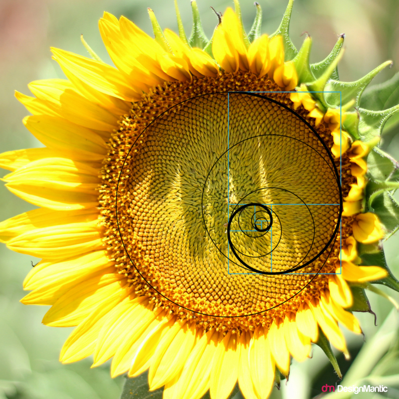 Nature's perfect pattern designs in Sunflower